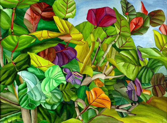 The Colorful Dynamics of a Plant - Winter in the Caribbean Seagrape Leaves
